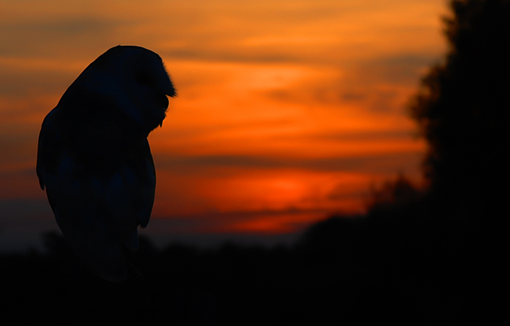 owl by night.jpg